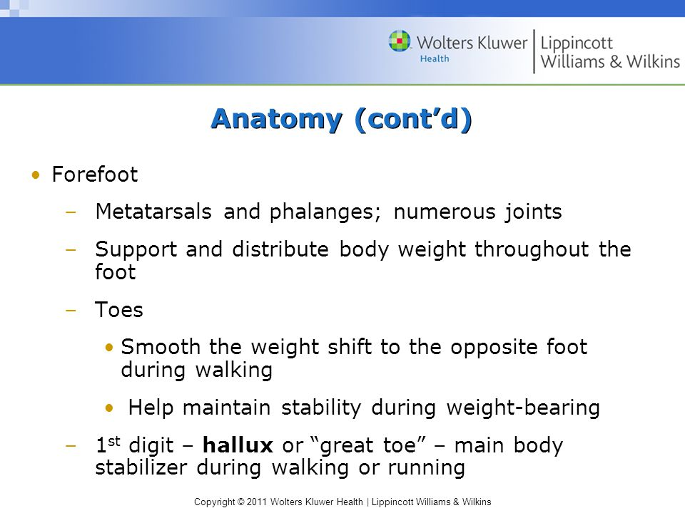 Copyright © 2011 Wolters Kluwer Health   Lippincott Williams & Wilkins Anatomy (cont'd) Forefoot –Metatarsals and phalanges; numerous joints –Support and distribute body weight throughout the foot –Toes Smooth the weight shift to the opposite foot during walking Help maintain stability during weight-bearing –1 st digit – hallux or great toe – main body stabilizer during walking or running