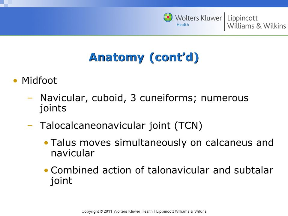 Copyright © 2011 Wolters Kluwer Health   Lippincott Williams & Wilkins Anatomy (cont'd) Midfoot –Navicular, cuboid, 3 cuneiforms; numerous joints –Talocalcaneonavicular joint (TCN) Talus moves simultaneously on calcaneus and navicular Combined action of talonavicular and subtalar joint