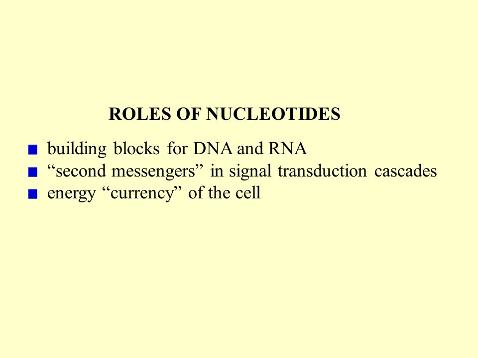 building blocks for DNA and RNA second messengers in signal transduction cascades energy currency of the cell ROLES OF NUCLEOTIDES
