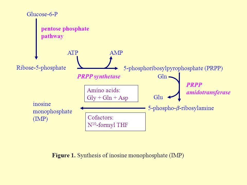 Ribose-5-phosphate 5-phospho-  -ribosylamine Glu PRPP amidotransferase Gln inosine monophosphate (IMP) Amino acids: Gly + Gln + Asp Cofactors: N 10 -formyl THF Glucose-6-P pentose phosphate pathway PRPP synthetase ATPAMP 5-phosphoribosylpyrophosphate (PRPP) Figure 1.