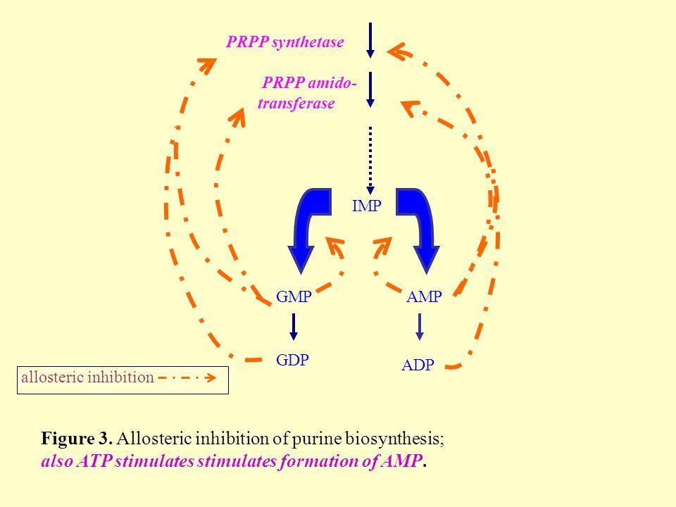 allosteric inhibition PRPP synthetase PRPP amido- transferase IMP GMPAMP GDP ADP Figure 3.