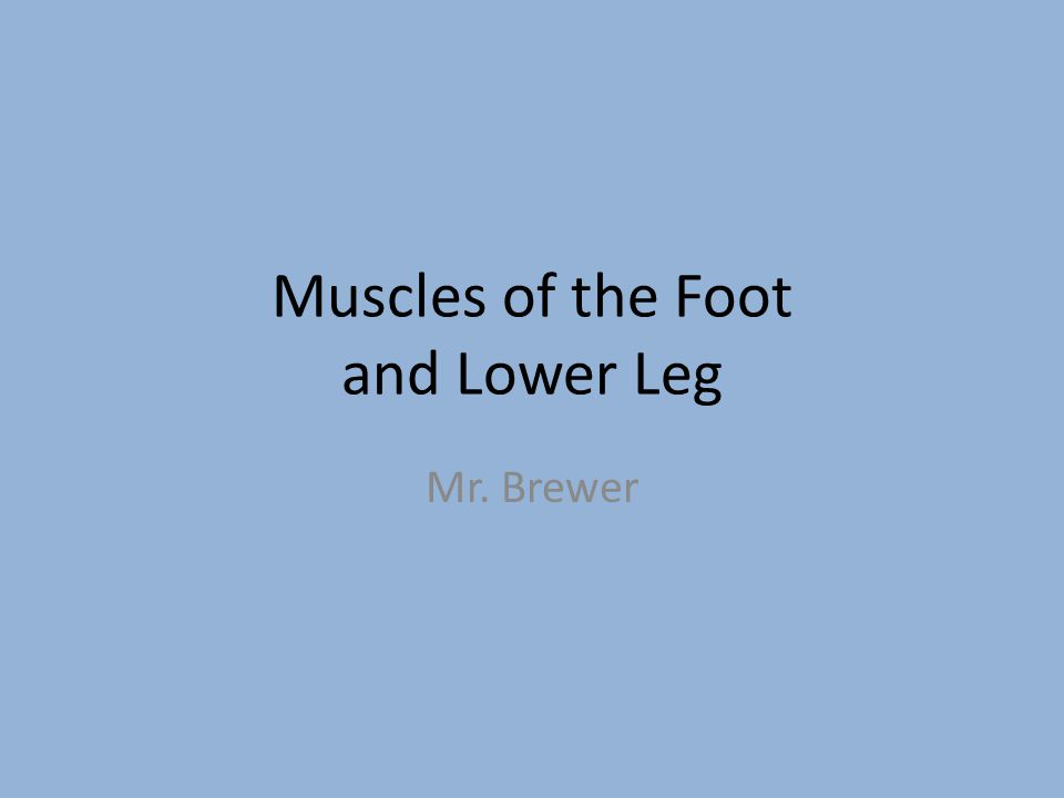 Muscles of the Foot and Lower Leg Mr. Brewer