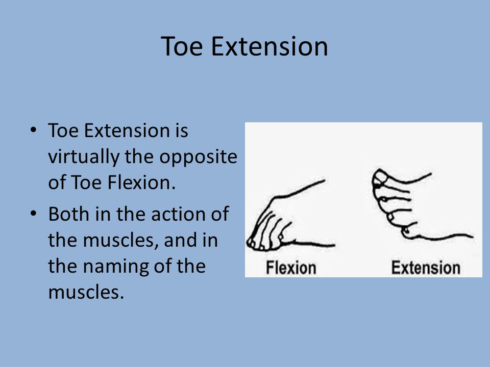 Toe Extension Toe Extension is virtually the opposite of Toe Flexion. Both in the action of the muscles, and in the naming of the muscles.