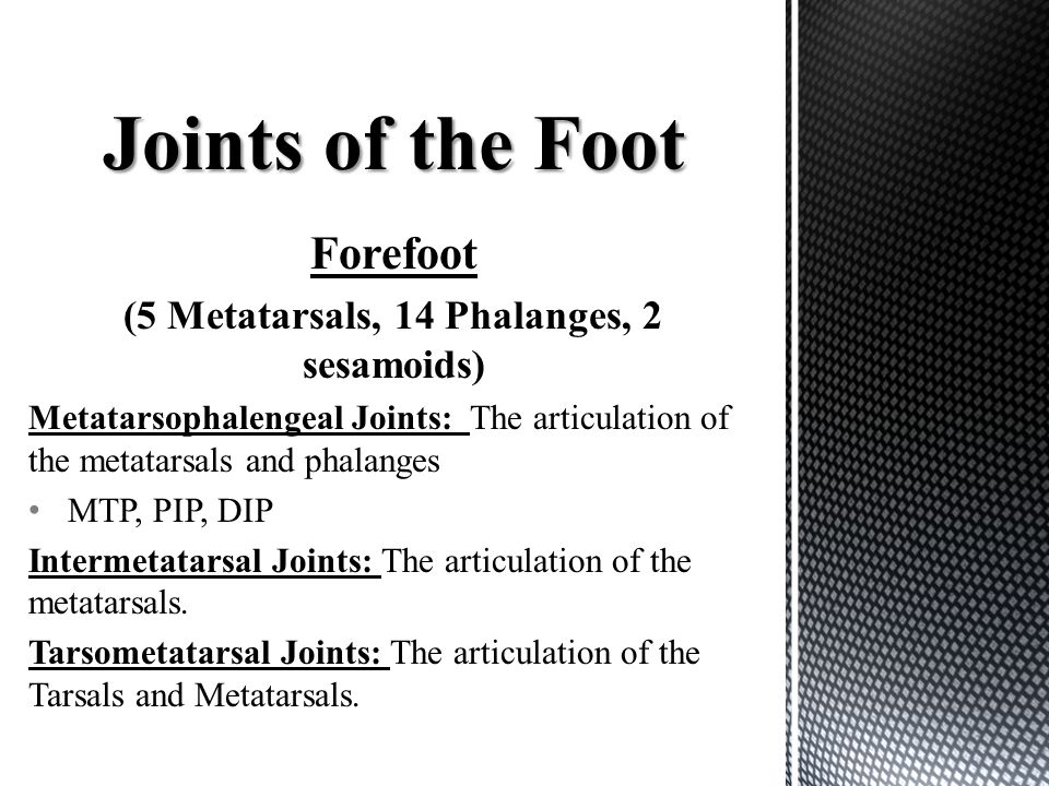 Forefoot (5 Metatarsals, 14 Phalanges, 2 sesamoids) Metatarsophalengeal Joints: The articulation of the metatarsals and phalanges MTP, PIP, DIP Interm
