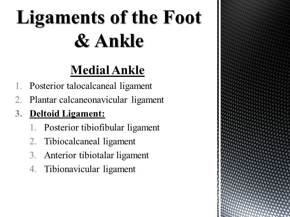 Medial Ankle 1.Posterior talocalcaneal ligament 2.Plantar calcaneonavicular ligament 3.Deltoid Ligament: 1.Posterior tibiofibular ligament 2.Tibiocalc