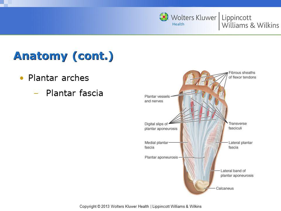 Copyright © 2013 Wolters Kluwer Health | Lippincott Williams & Wilkins Anatomy (cont.) Plantar arches –Plantar fascia