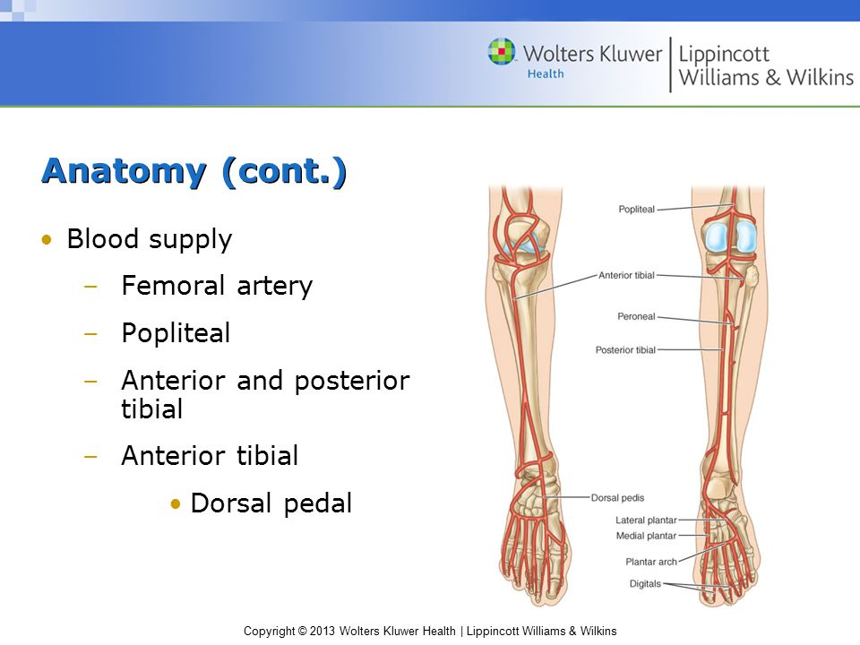 Copyright © 2013 Wolters Kluwer Health | Lippincott Williams & Wilkins Kinematics Gait cycle –Consists of alternating periods of single-leg and double-leg support –Requires a set of coordinated, sequential joint actions of the lower extremity