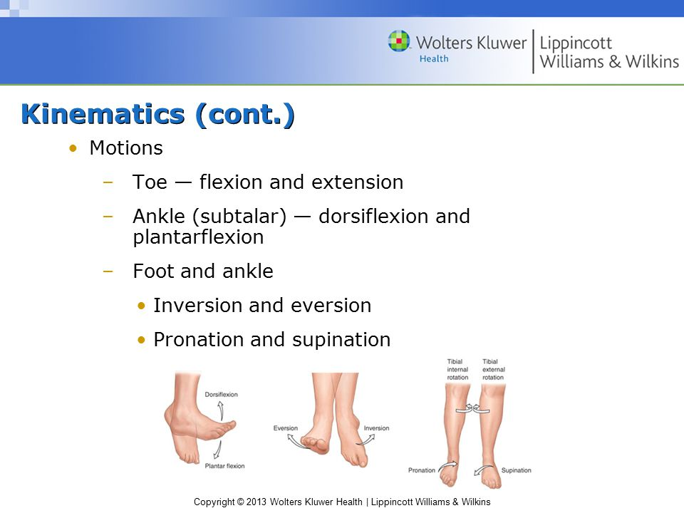 Copyright © 2013 Wolters Kluwer Health | Lippincott Williams & Wilkins Kinetics Bones subject to several loading patterns Running –Foot sustains forces 2–3× body weight –Bones are typically 2–4× strength needed Repeated forces—stress fractures Foot deforms during weight bearing –Absorbing a smaller force of longer duration than if it were rigid –Deformation causes storage of mechanical energy in the stretched tendons, ligaments, and plantar fascia