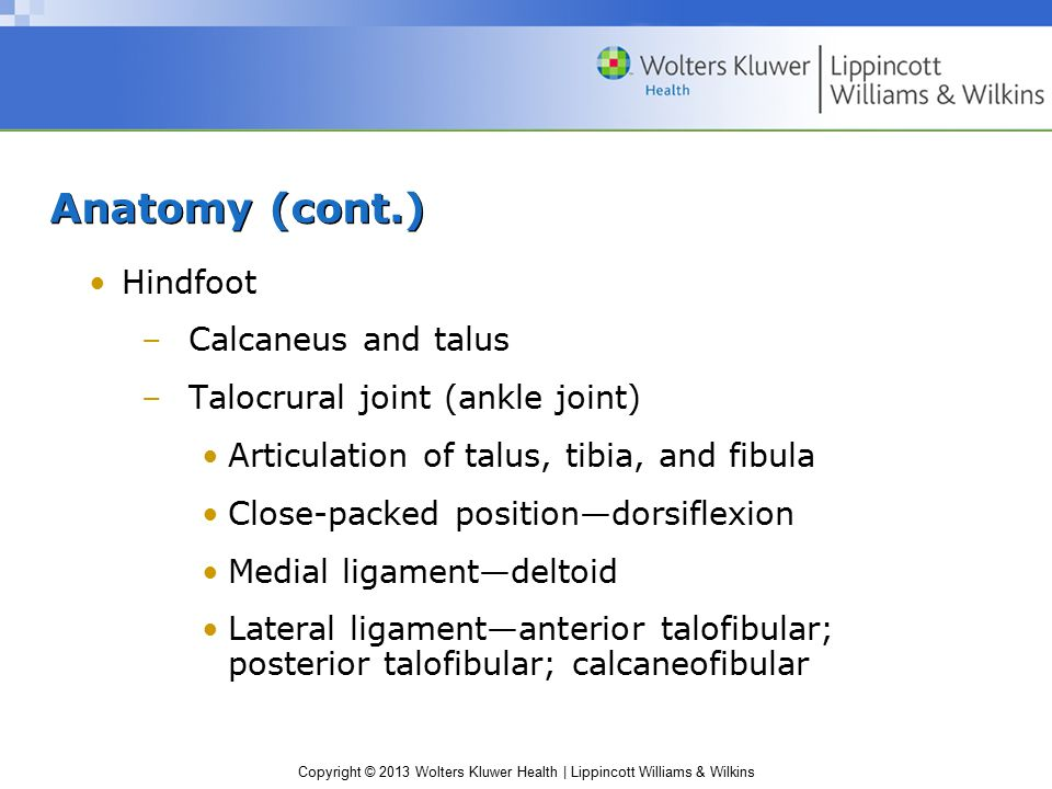 Copyright © 2013 Wolters Kluwer Health | Lippincott Williams & Wilkins Anatomy (cont.) Hindfoot –Calcaneus and talus –Talocrural joint (ankle joint) A