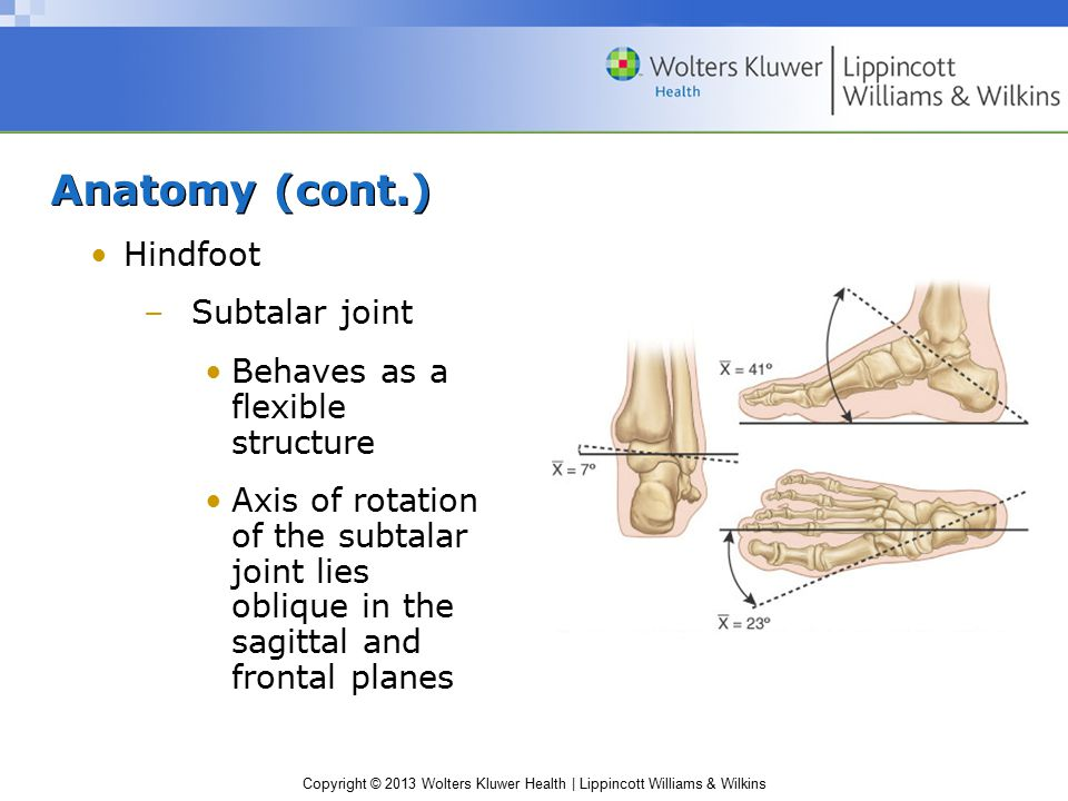 Copyright © 2013 Wolters Kluwer Health | Lippincott Williams & Wilkins Anatomy (cont.) Hindfoot –Subtalar joint Behaves as a flexible structure Axis o