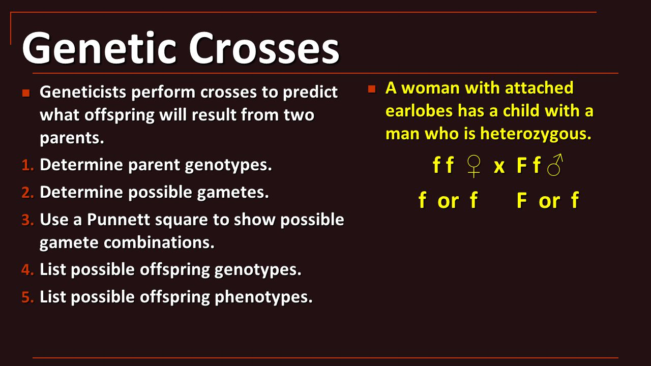Genetic Crosses Geneticists perform crosses to predict what offspring will result from two parents. Geneticists perform crosses to predict what offspr