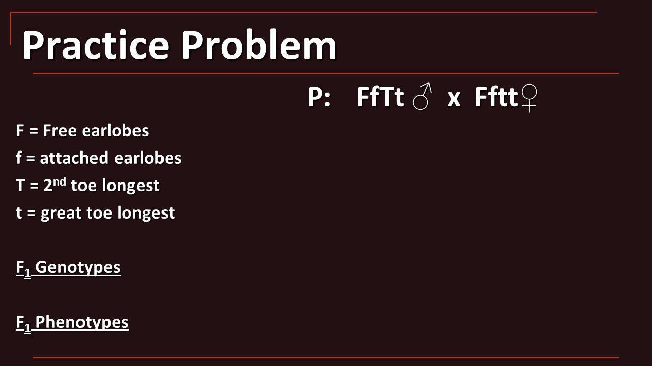 Practice Problem P:FfTt ♂ x Fftt ♀ F = Free earlobes f = attached earlobes T = 2 nd toe longest t = great toe longest F 1 Genotypes F 1 Phenotypes