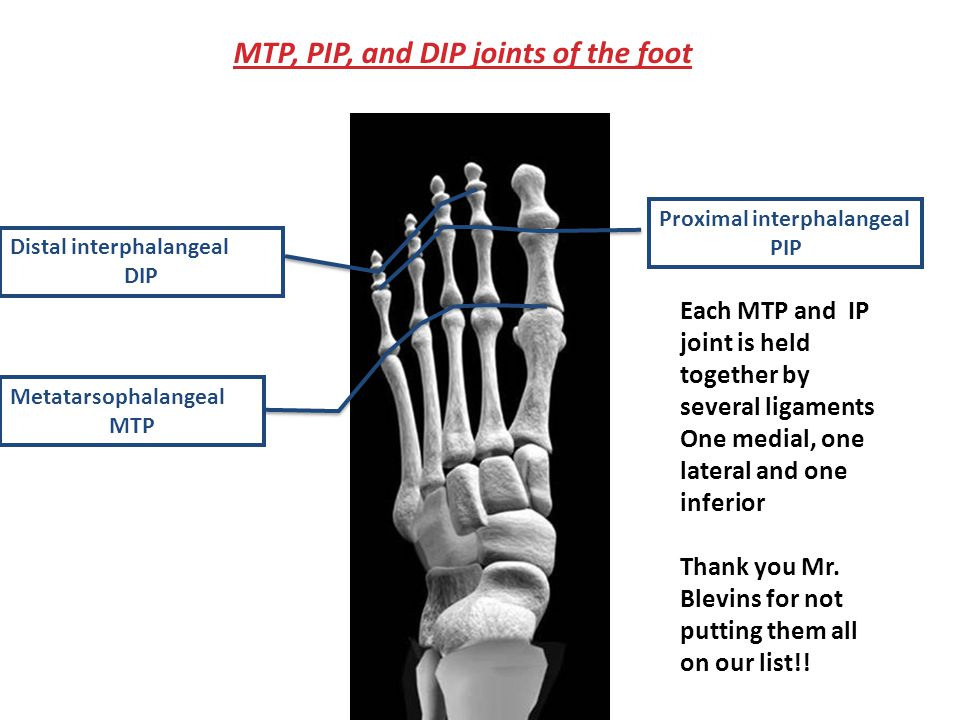 Metatarsophalangeal MTP Proximal interphalangeal PIP Distal interphalangeal DIP MTP, PIP, and DIP joints of the foot Each MTP and IP joint is held together by several ligaments One medial, one lateral and one inferior Thank you Mr.