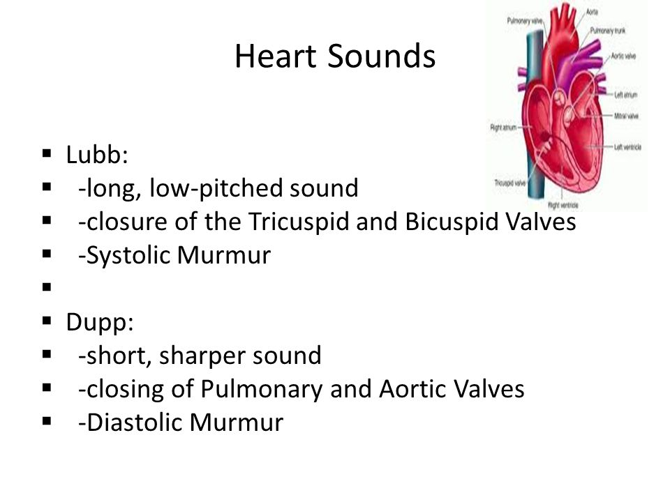 Heart Sounds  Lubb:  -long, low-pitched sound  -closure of the Tricuspid and Bicuspid Valves  -Systolic Murmur   Dupp:  -short, sharper sound 