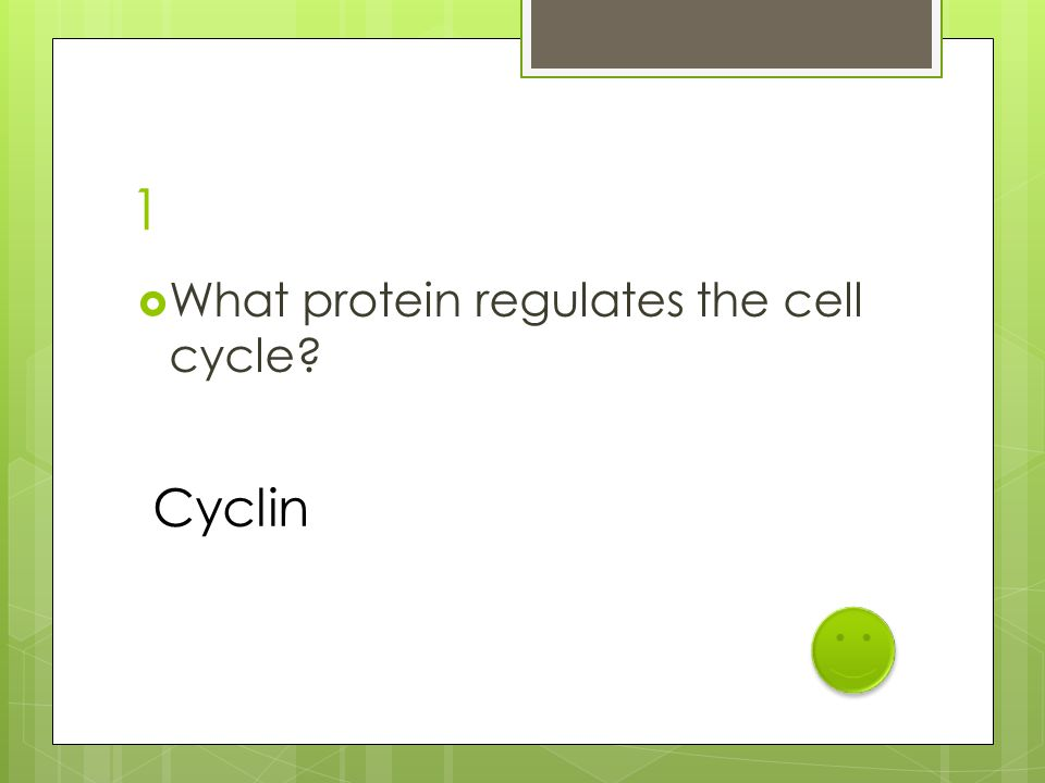 1  What protein regulates the cell cycle? Cyclin