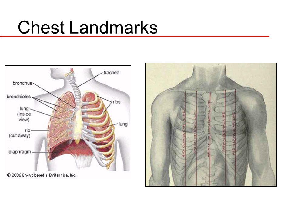 Chest Landmarks