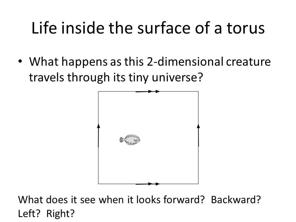 Life inside the surface of a torus What happens as this 2-dimensional creature travels through its tiny universe? What does it see when it looks forwa