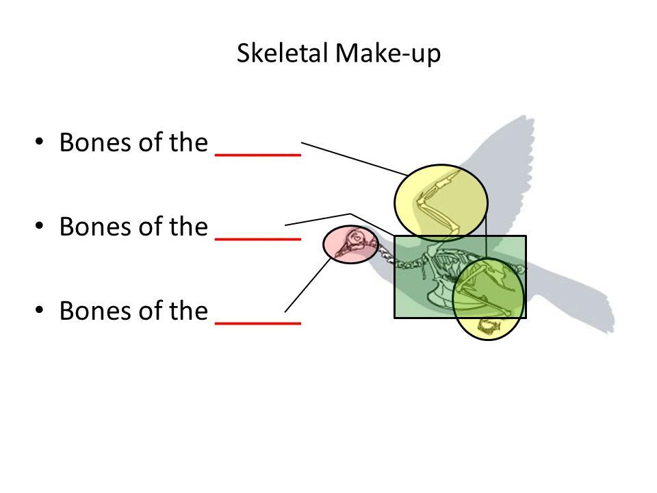 Skeletal Make-up Bones of the ______