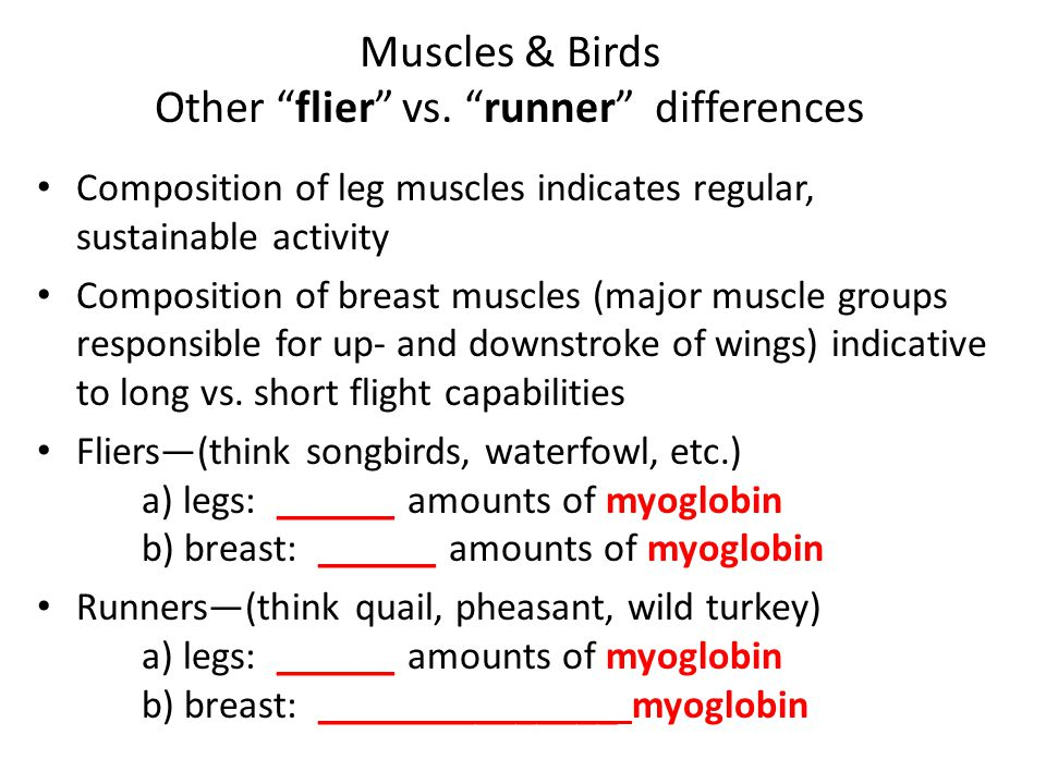 """Muscles & Birds Other """"flier"""" vs. """"runner"""" differences Composition of leg muscles indicates regular, sustainable activity Composition of breast muscle"""
