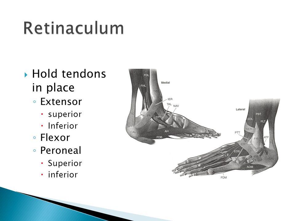  Hold tendons in place ◦ Extensor  superior  Inferior ◦ Flexor ◦ Peroneal  Superior  inferior
