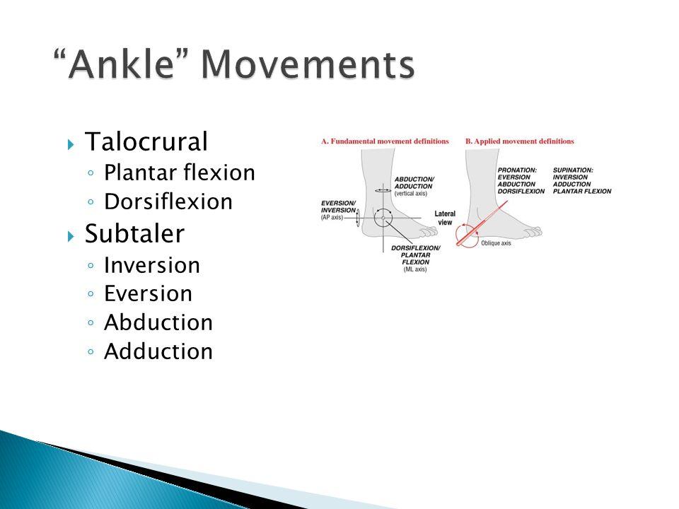  Talocrural ◦ Plantar flexion ◦ Dorsiflexion  Subtaler ◦ Inversion ◦ Eversion ◦ Abduction ◦ Adduction