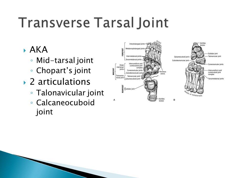  AKA ◦ Mid-tarsal joint ◦ Chopart's joint  2 articulations ◦ Talonavicular joint ◦ Calcaneocuboid joint