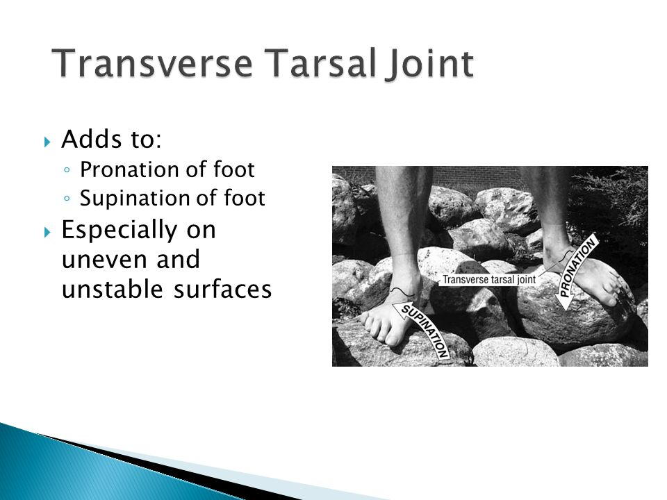  Adds to: ◦ Pronation of foot ◦ Supination of foot  Especially on uneven and unstable surfaces