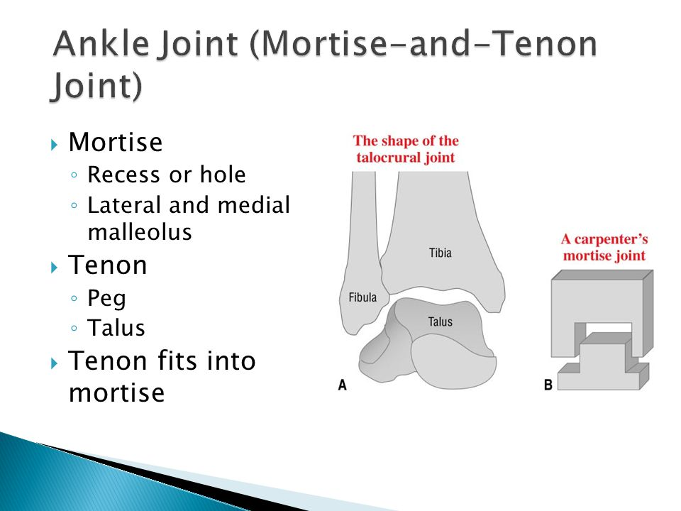  Mortise ◦ Recess or hole ◦ Lateral and medial malleolus  Tenon ◦ Peg ◦ Talus  Tenon fits into mortise
