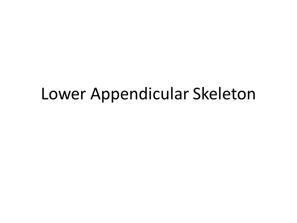 Lower Appendicular Skeleton