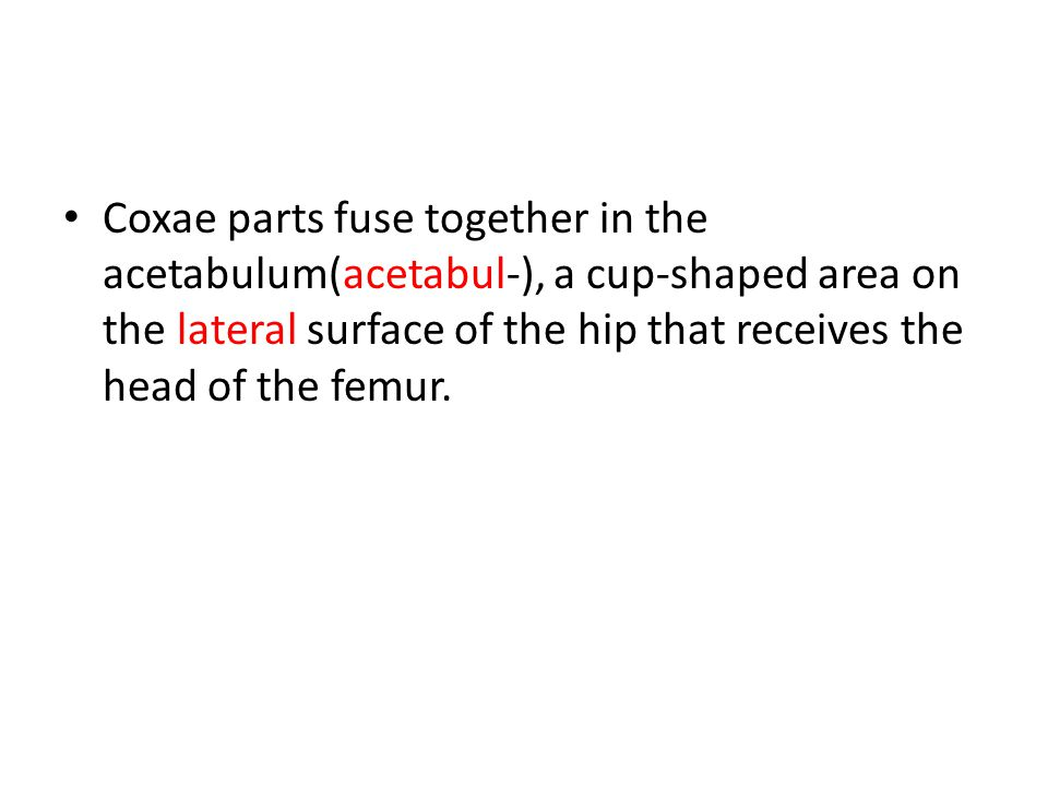 Coxae parts fuse together in the acetabulum(acetabul-), a cup-shaped area on the lateral surface of the hip that receives the head of the femur.