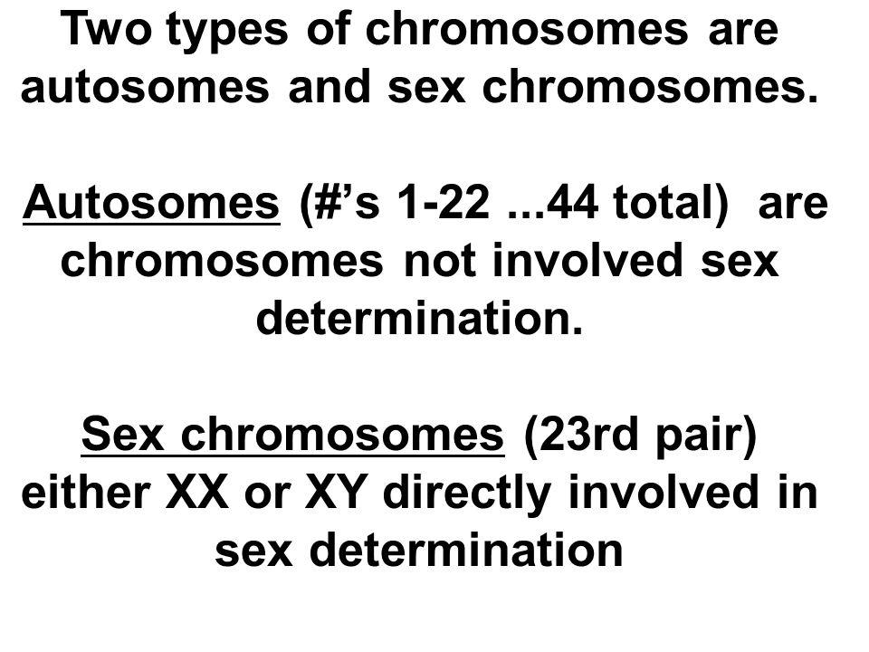 Two types of chromosomes are autosomes and sex chromosomes. Autosomes (#'s 1-22...44 total) are chromosomes not involved sex determination. Sex chromo