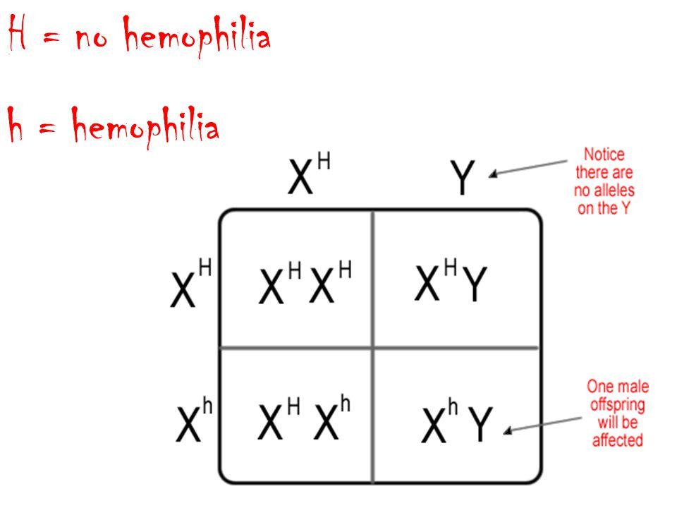 H = no hemophilia h = hemophilia