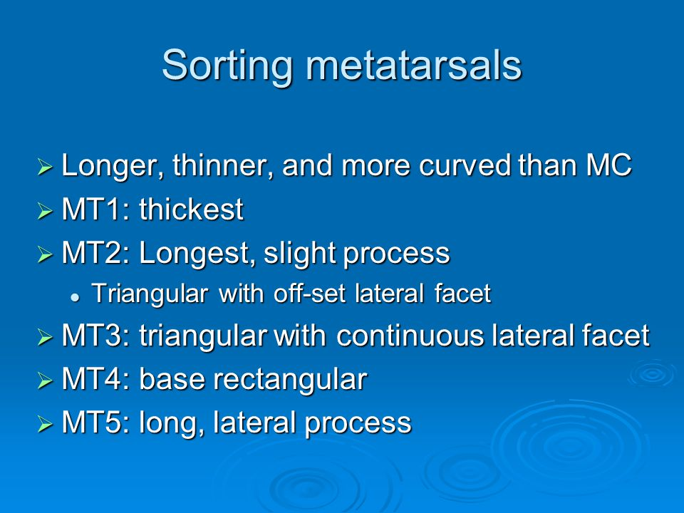 Sorting metatarsals  Longer, thinner, and more curved than MC  MT1: thickest  MT2: Longest, slight process Triangular with off-set lateral facet Triangular with off-set lateral facet  MT3: triangular with continuous lateral facet  MT4: base rectangular  MT5: long, lateral process