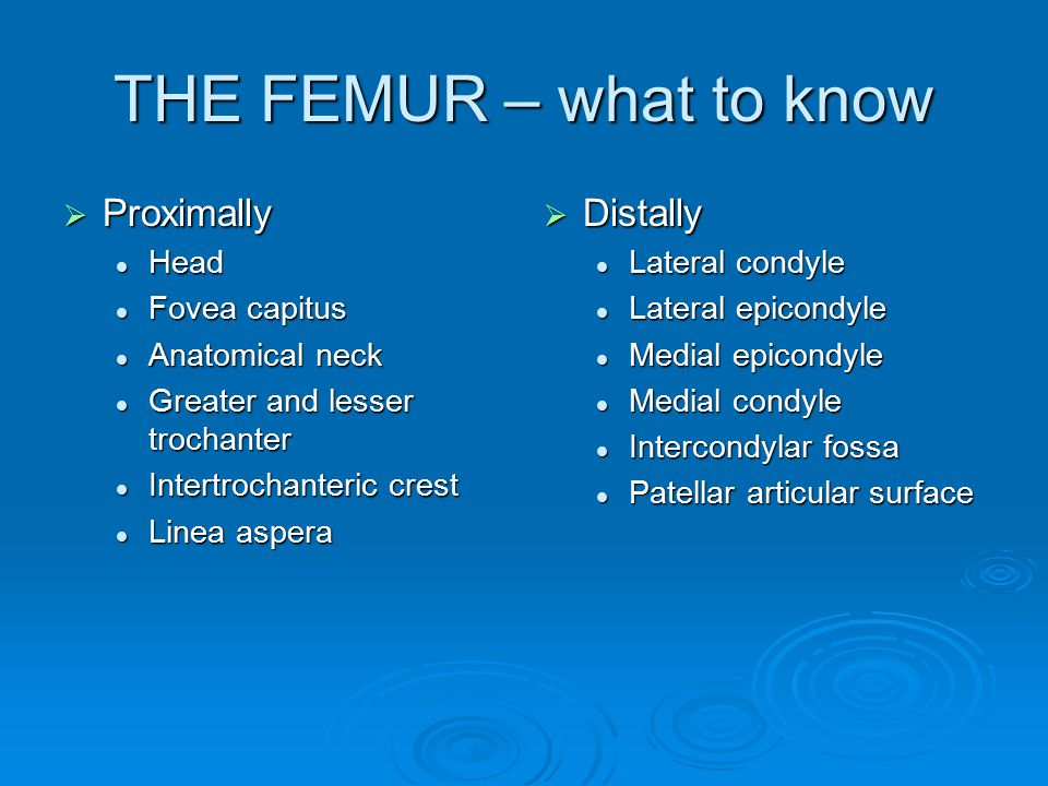 THE FEMUR – what to know  Proximally Head Head Fovea capitus Fovea capitus Anatomical neck Anatomical neck Greater and lesser trochanter Greater and lesser trochanter Intertrochanteric crest Intertrochanteric crest Linea aspera Linea aspera  Distally Lateral condyle Lateral epicondyle Medial epicondyle Medial condyle Intercondylar fossa Patellar articular surface