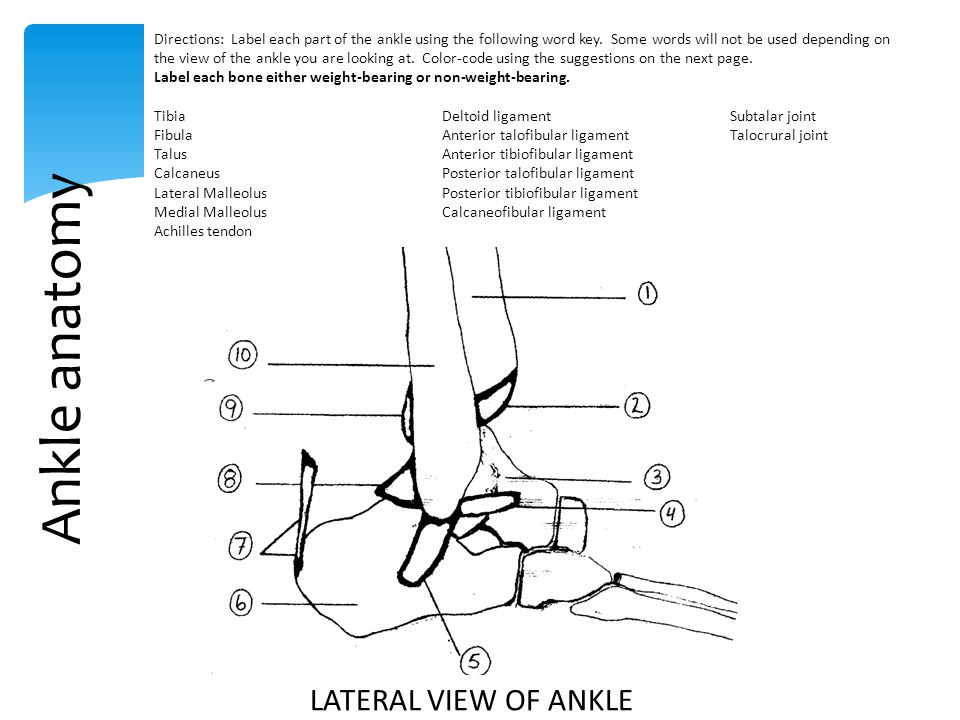 Ankle anatomy Directions: Label each part of the ankle using the following word key. Some words will not be used depending on the view of the ankle yo