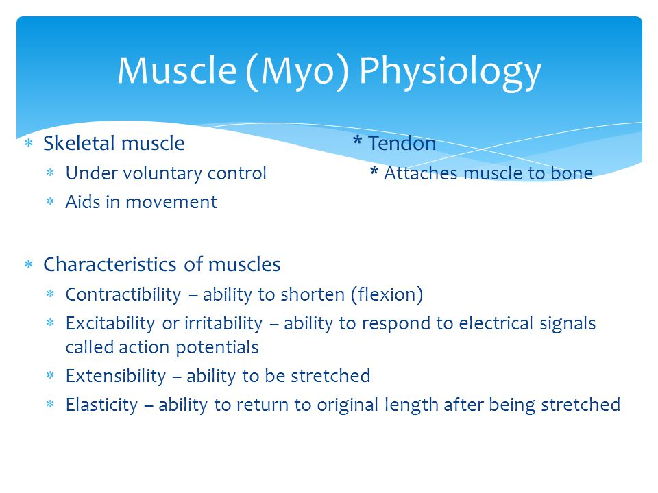  Skeletal muscle* Tendon  Under voluntary control * Attaches muscle to bone  Aids in movement  Characteristics of muscles  Contractibility – abil