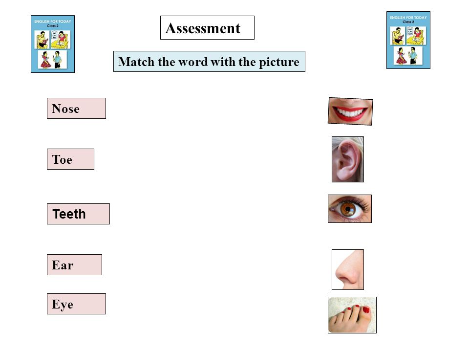 Teeth Eye Toe Nose Ear Match the word with the picture Assessment