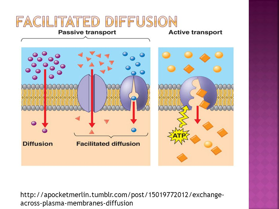 Some molecules and particles are too big to move by diffusion or to use the cell membrane's transport proteins.