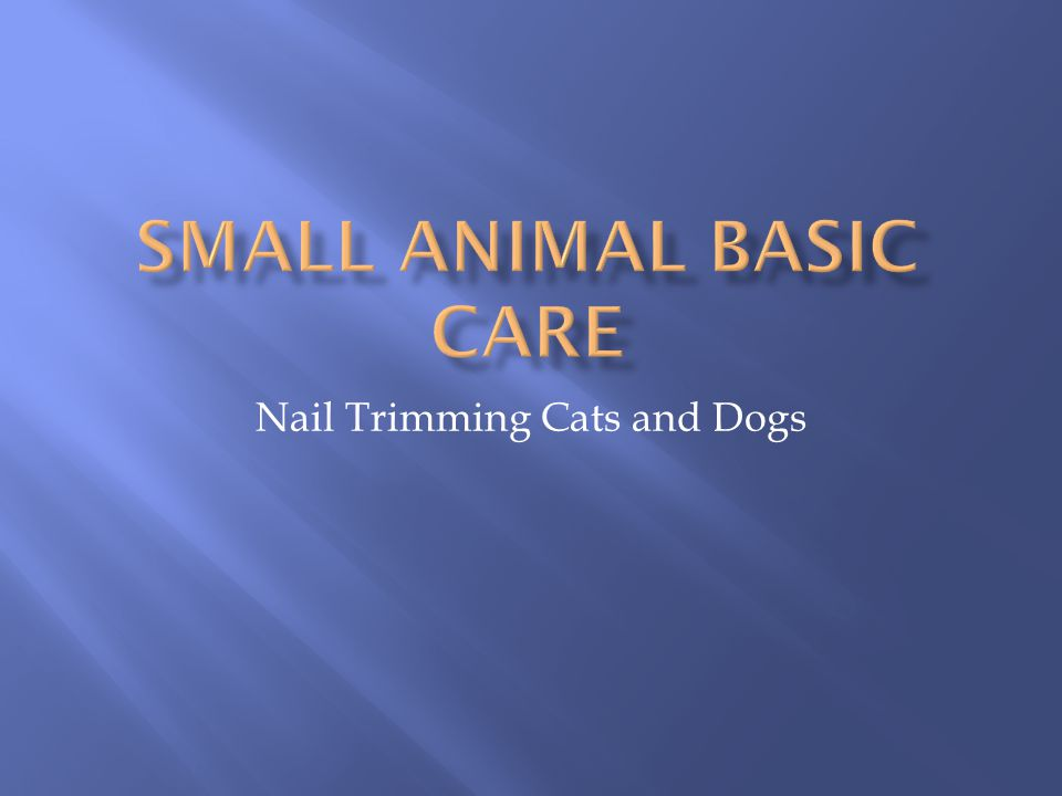 Nail Trimming Cats and Dogs