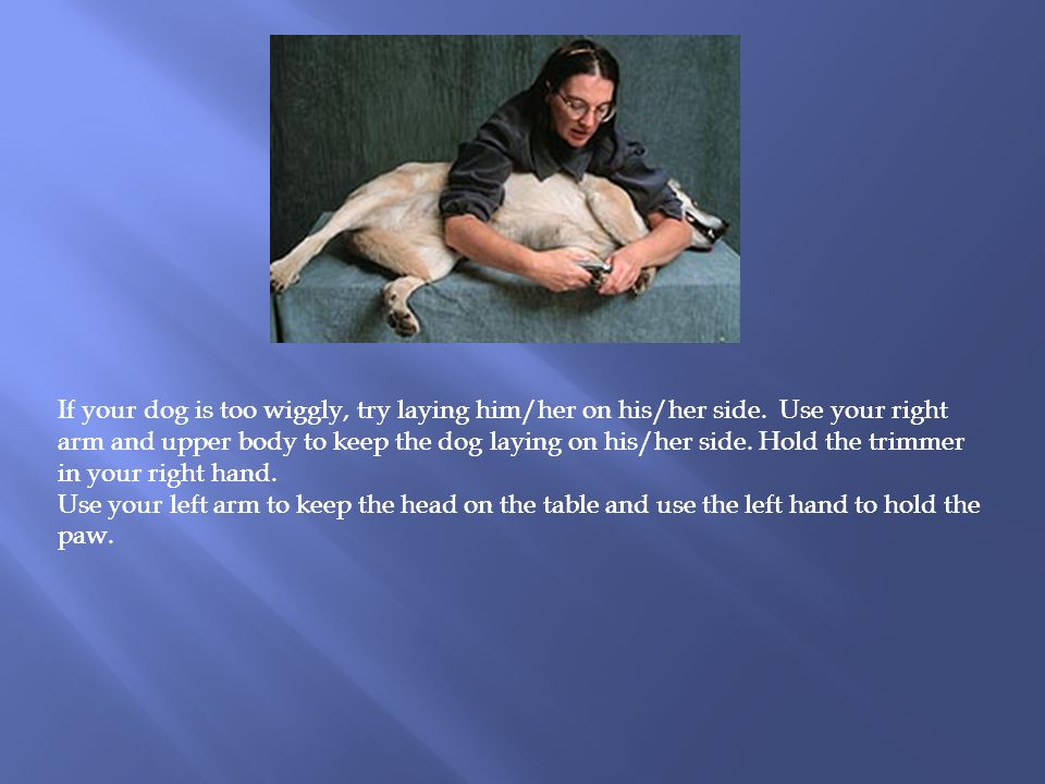 If your dog is too wiggly, try laying him/her on his/her side.