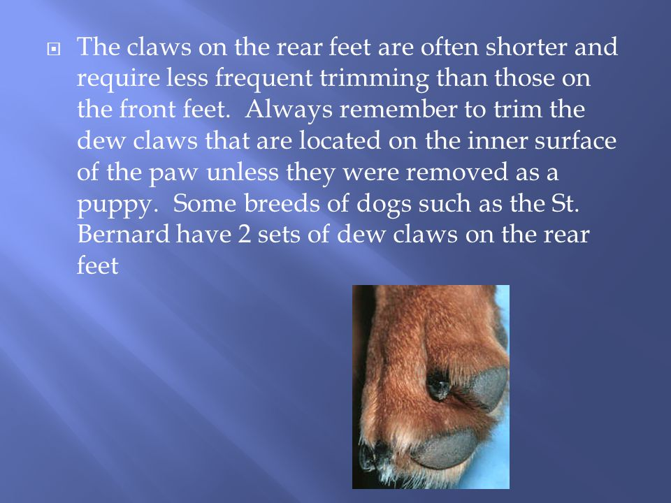  The claws on the rear feet are often shorter and require less frequent trimming than those on the front feet.