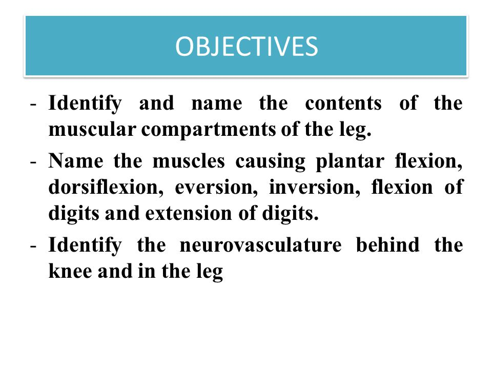 OBJECTIVES -Identify and name the contents of the muscular compartments of the leg.