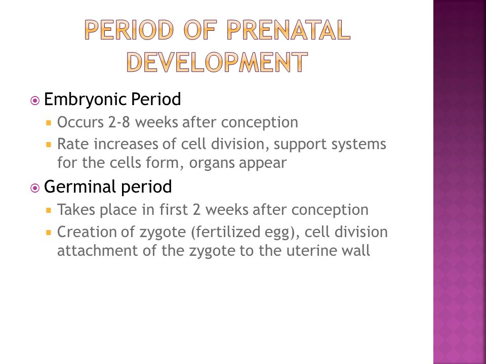  Embryonic Period  Occurs 2-8 weeks after conception  Rate increases of cell division, support systems for the cells form, organs appear  Germinal period  Takes place in first 2 weeks after conception  Creation of zygote (fertilized egg), cell division attachment of the zygote to the uterine wall
