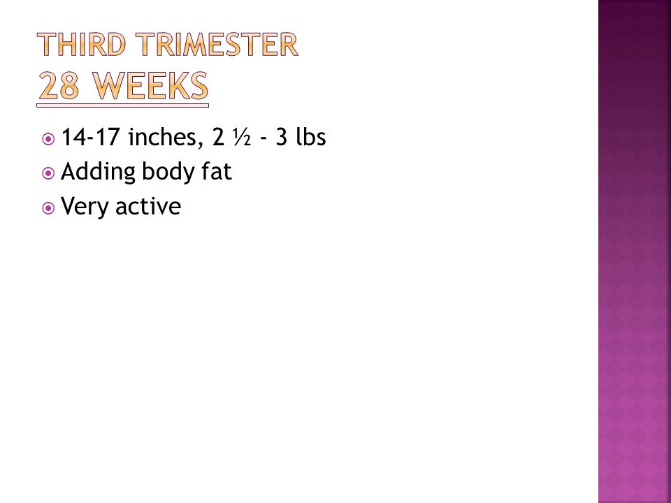  14-17 inches, 2 ½ - 3 lbs  Adding body fat  Very active