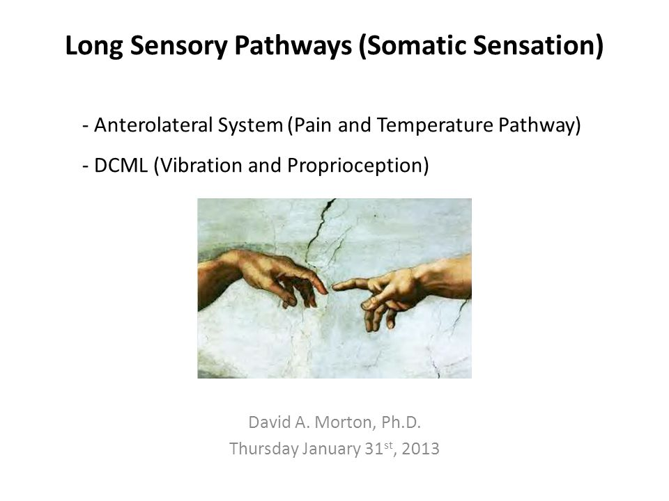 Objectives Somatic (general) sensation ALS and DCML pathways Identify pathways on sections