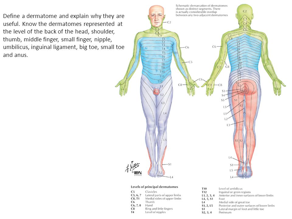 Define a dermatome and explain why they are useful.