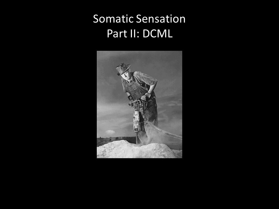 Somatic Sensation Part II: DCML