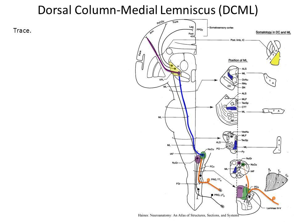 Trace. Dorsal Column-Medial Lemniscus (DCML)