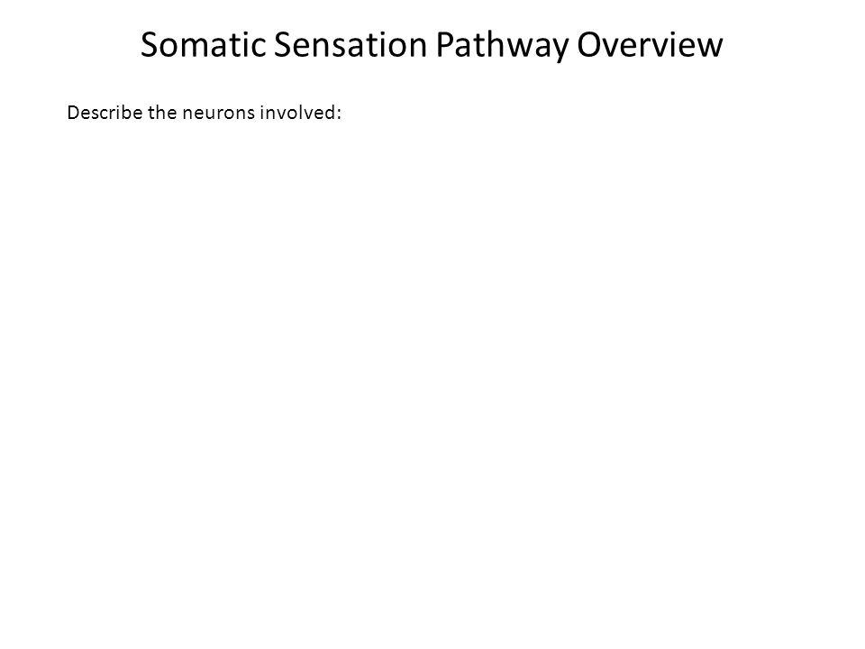 Somatic Sensation General sensation.