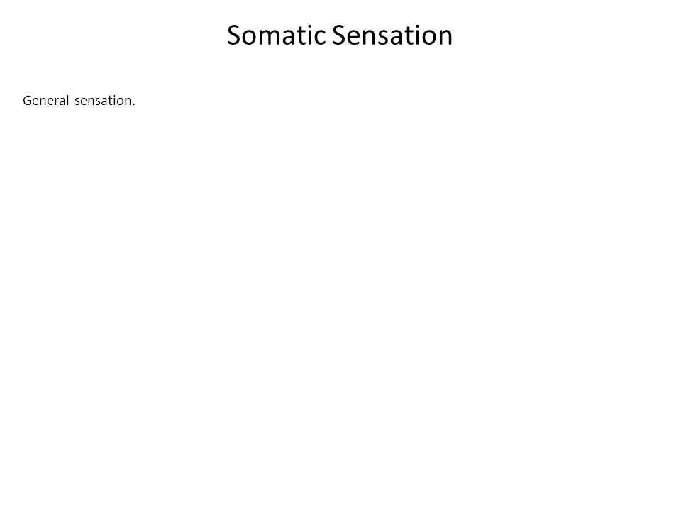 Somatic Sensation General sensation.